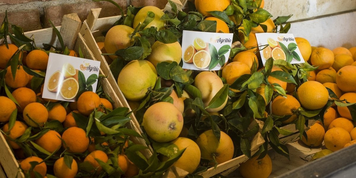 Agrumi Bio Sicilia - Arance, limoni, clementine, pompelmi di Sicilia