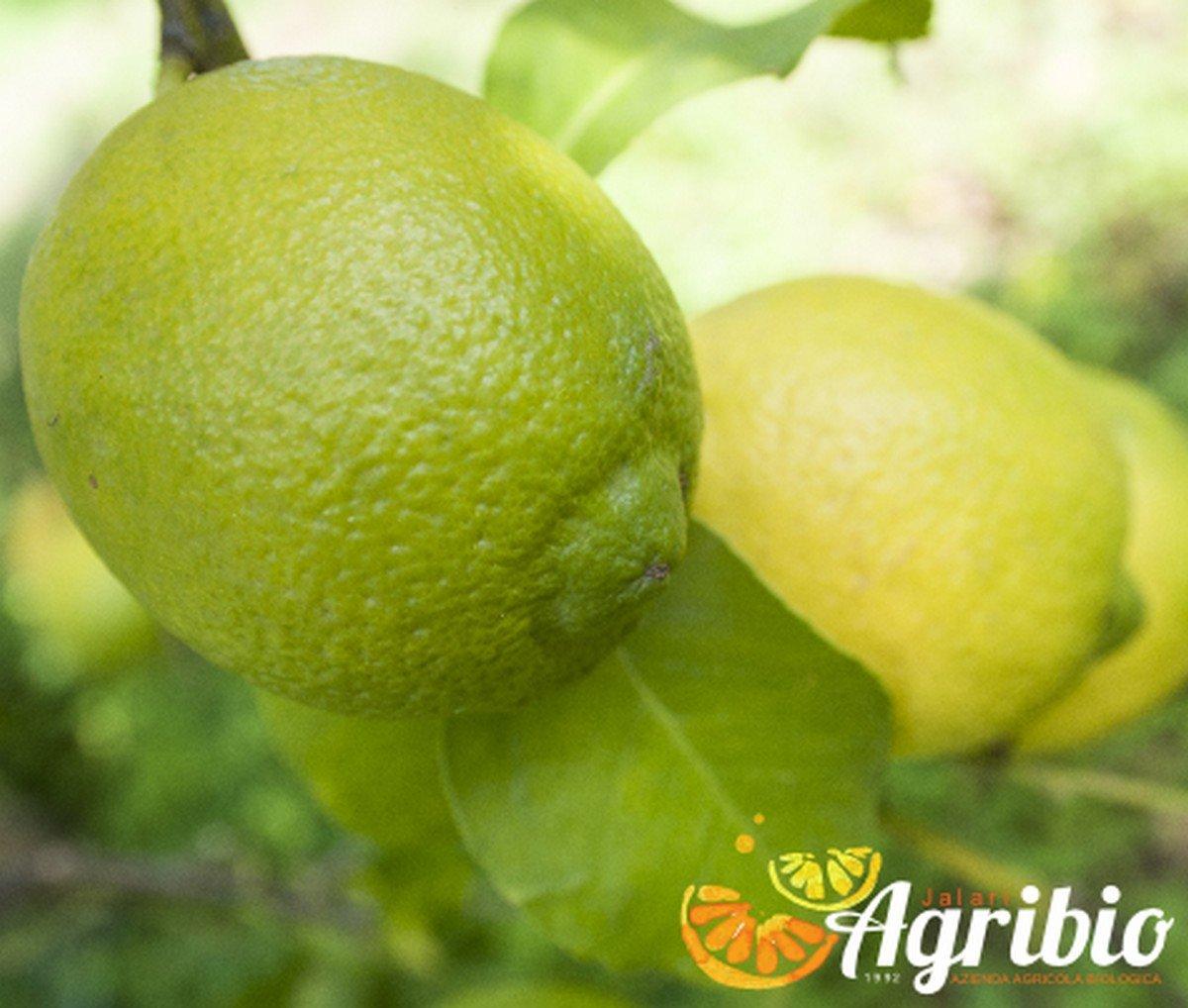Azienda agricola biologica jalari - Agrumi biologici siciliani - limone femminello siracusano