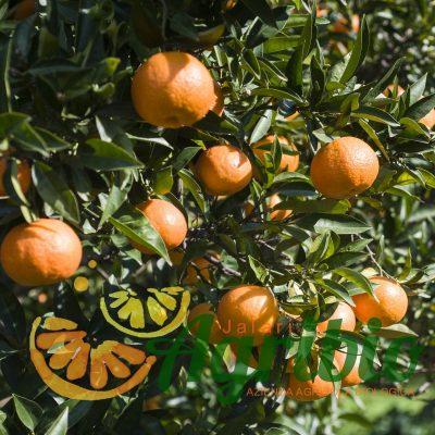 Clementine Biologiche Nova - Sicilia