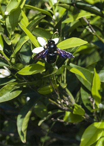 Gli insetti si stanno estinguendo Azienda Agricola Biologica Jalari