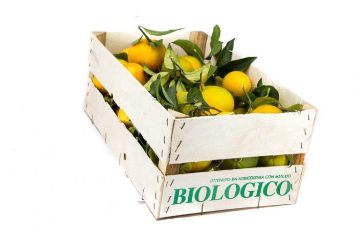 Arance Biologiche Newhall Sicilia
