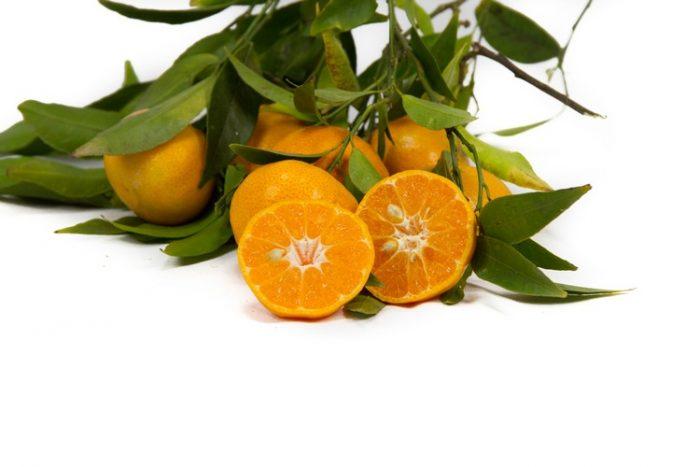 Mandarini Azienda Agricola Biologica Jalari