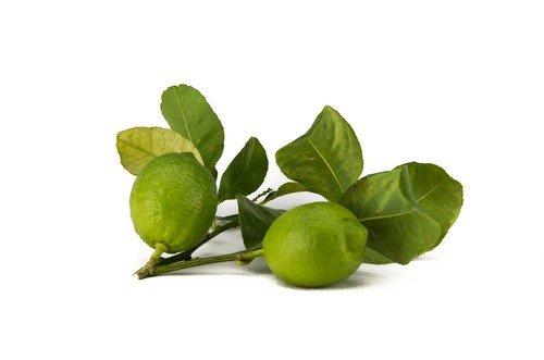 Limone Biologico Siciliano Verdello