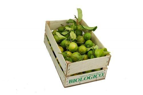 Limoni Primofiore Biologici