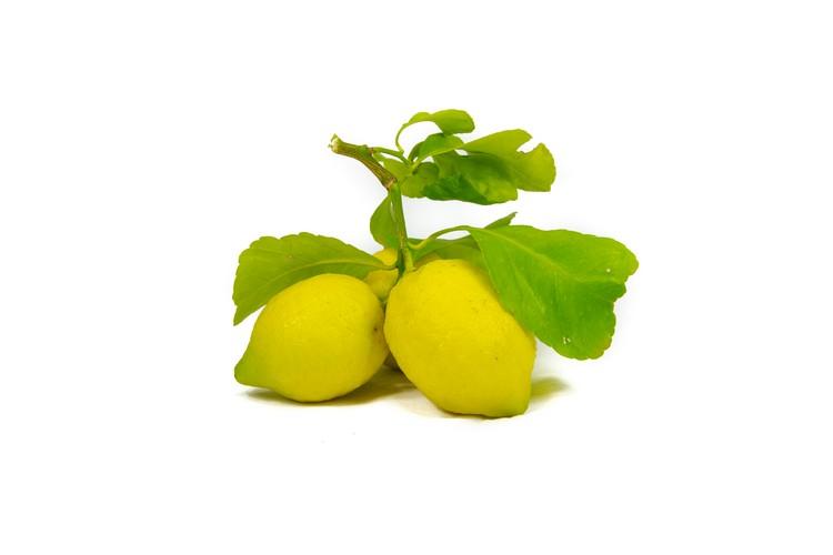 Limone Femminesso Siracusano Biologico