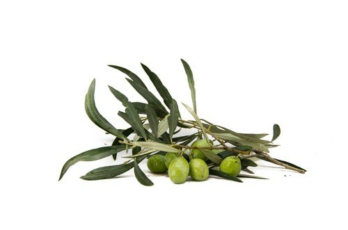 Olive verdi fresche Azienda Agricola Biologica Jalari