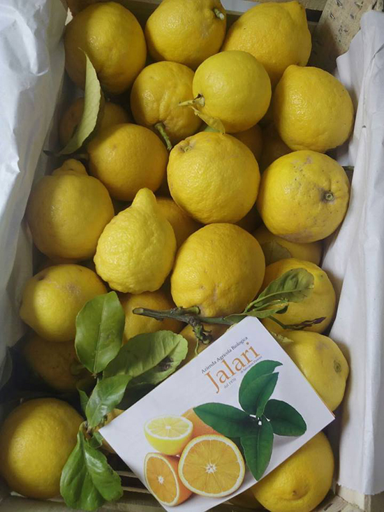 limoni biologici da spremuta
