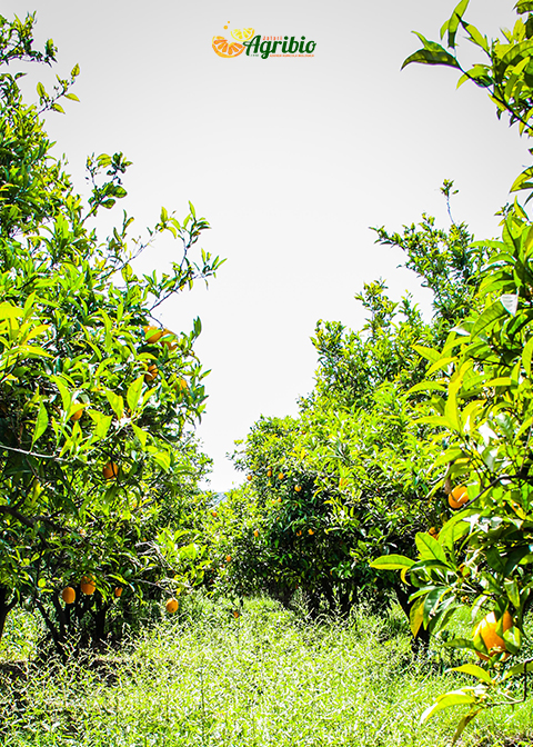 Le colture biologiche di AgriBio Jalari mese per mese Azienda Agricola Biologica Jalari