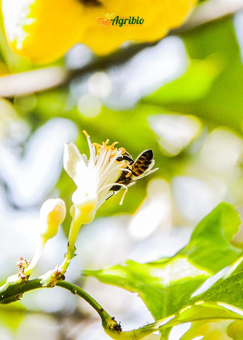 La lotta biologica integrata all'interno dell'azienda agricola biologica Jalari Azienda Agricola Biologica Jalari