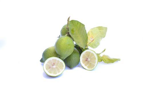 limoni primofiore bio