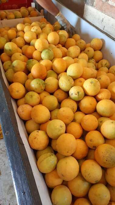 La stagione delle Arance Biologiche Siciliane Azienda Agricola Biologica Jalari